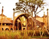 Disney's Animal Kingdom Villas - Kidani Village (4*)